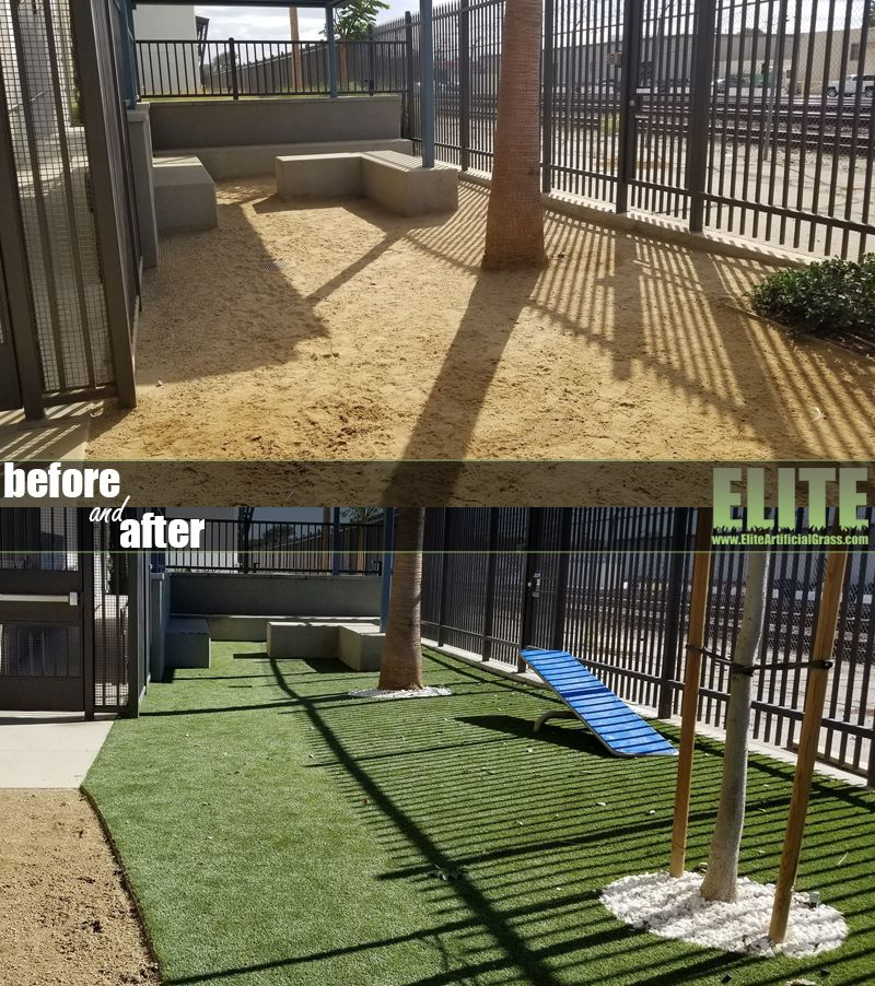 Pin by Elite Artificial Grass on Dog & Pet Turf Pet turf