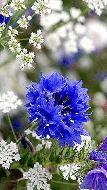 Полевые цветы гифы вставить фото
