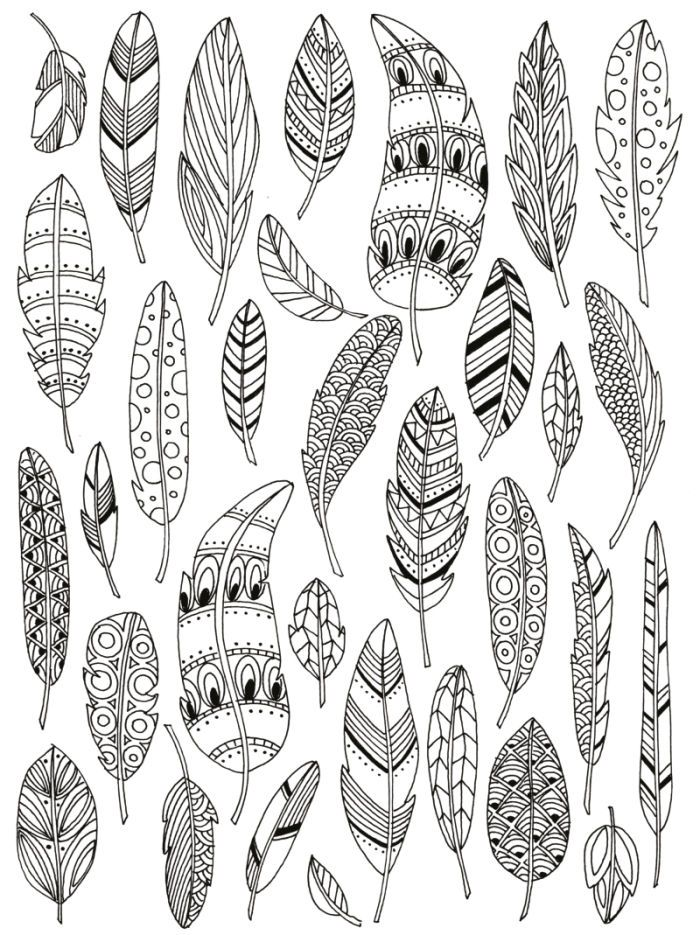 Feathers adult colouring davlin publishing for Coloring pages of feathers