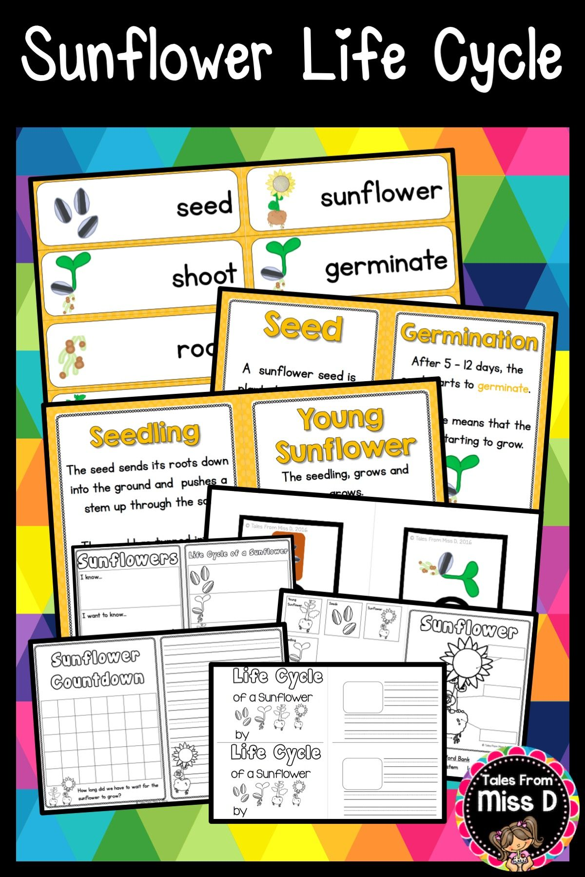 This Sunflower Life Cycle Pack Includes 10 Resources