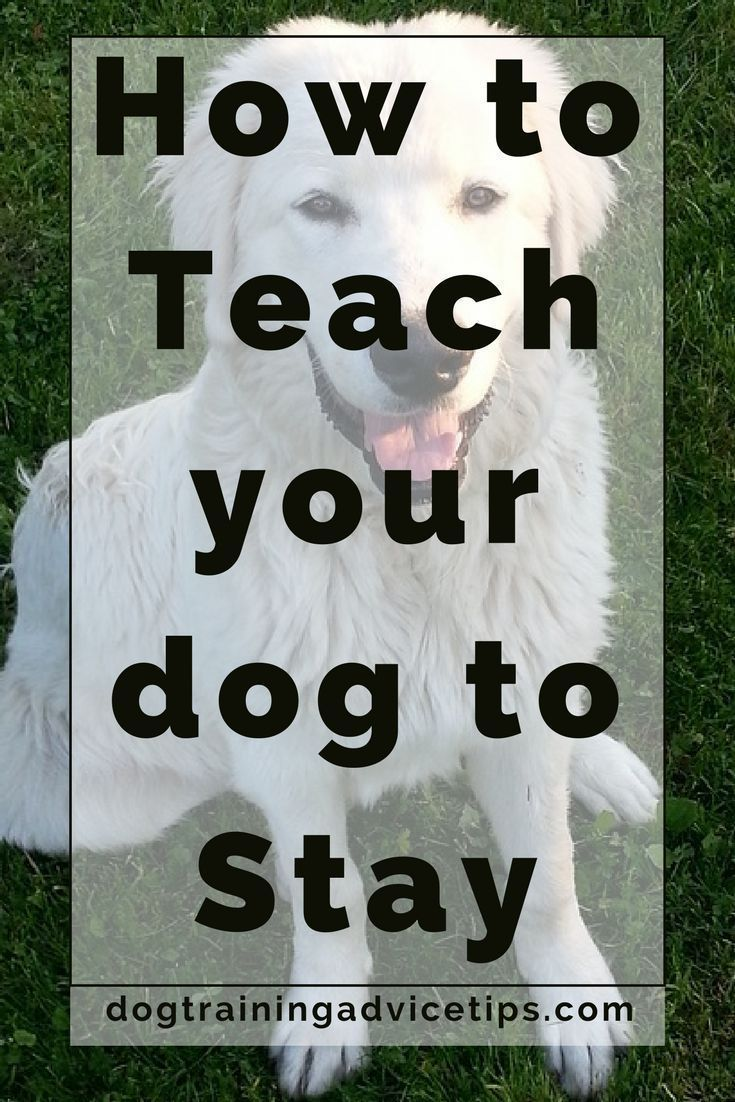 How to teach your dog to stay dog training advice tips