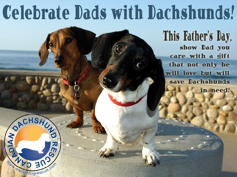 Remember Dad And The Weens Canadian Dachshund Rescue Ontario