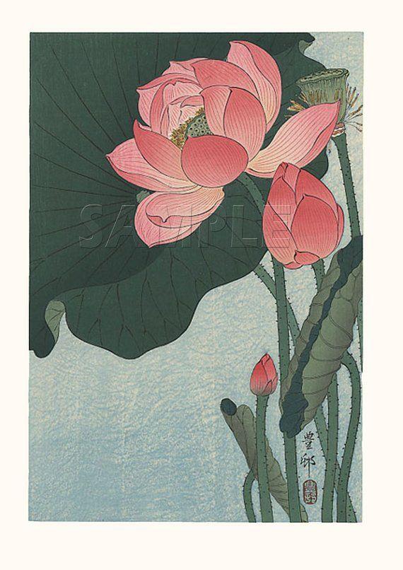 Flowering Lotus Beautiful Vintage Art Reproduction In 2019