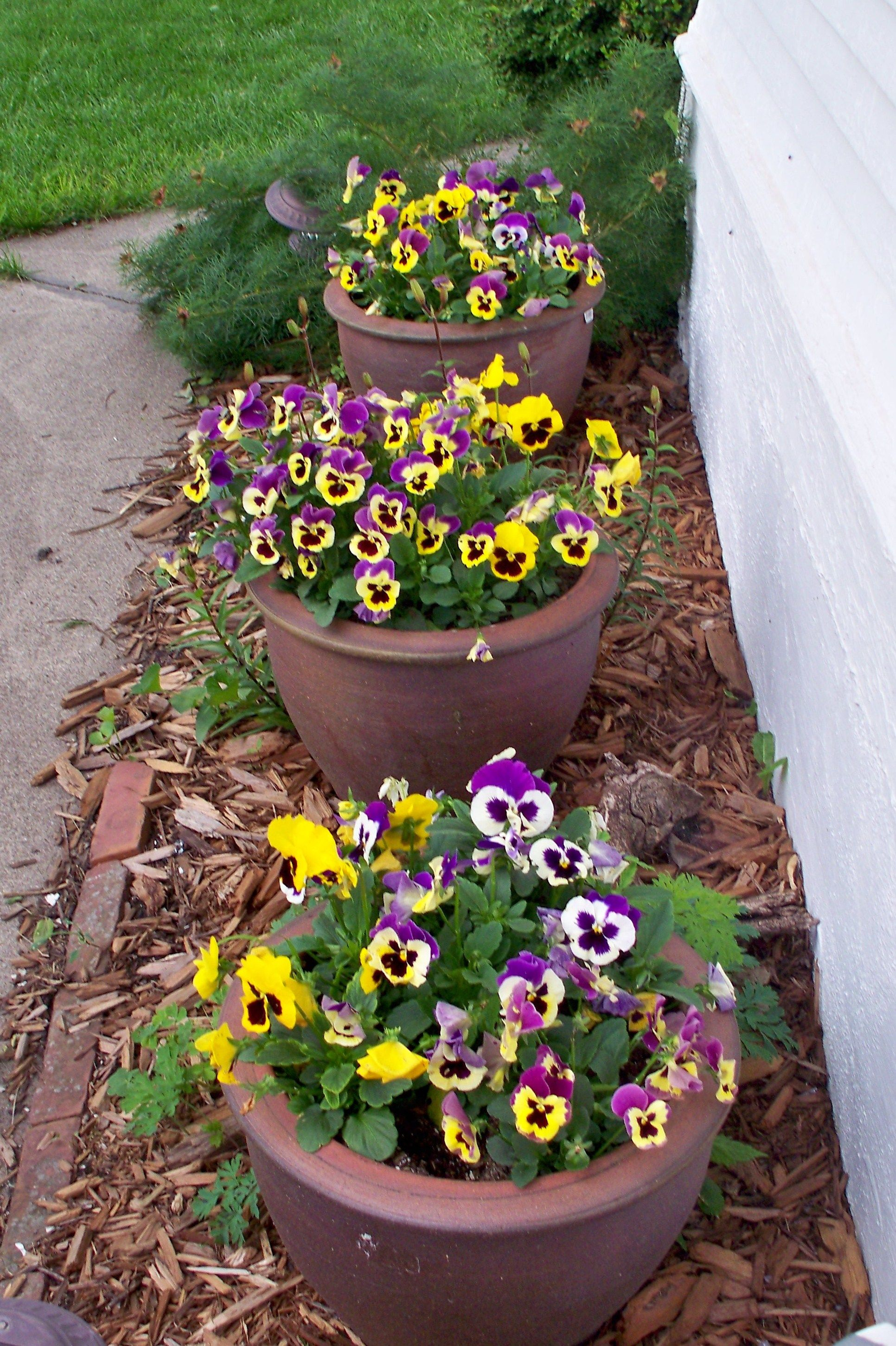 Pansies Such Happy Flowers Pansy Garden Beautiful Gardens Pansies Flowers