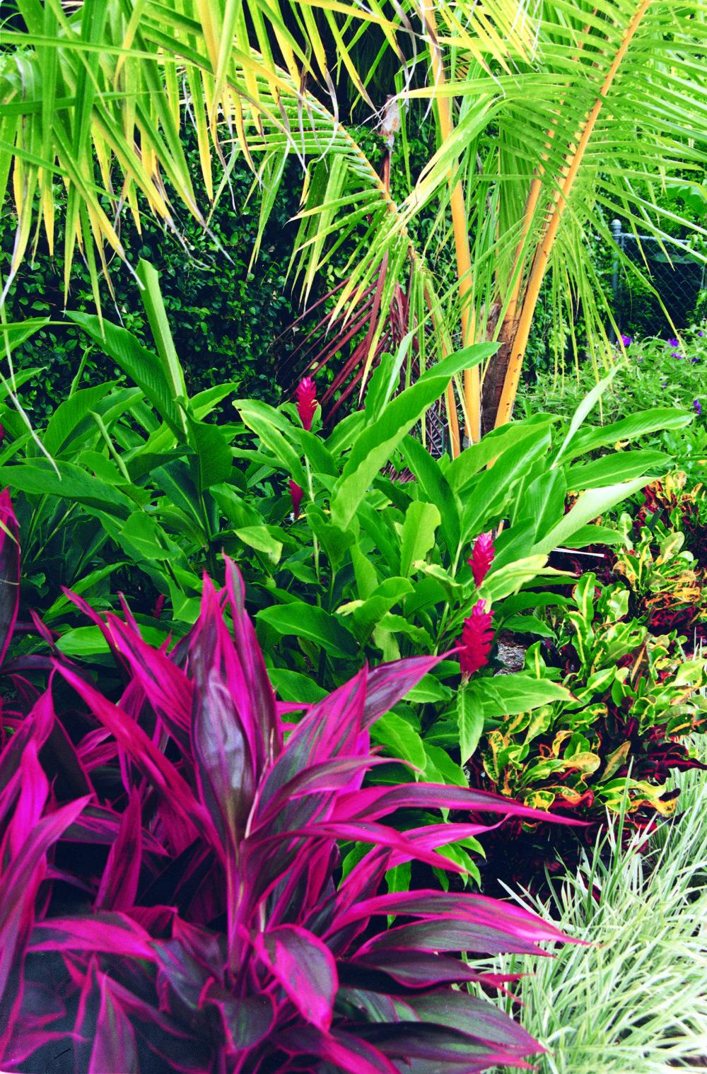 This tropical landscape in boca raton florida features ti for Exotic garden designs