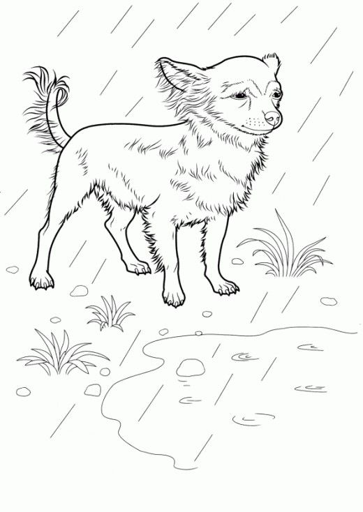 Best Dog Coloring Pages Free dogs, Stress reliever and Colour book - best of coloring pages for adults dogs