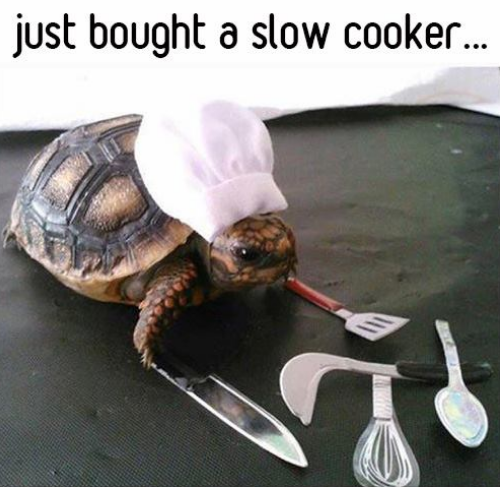 4b45f959cb937f16036b11ca61ff9273 just bought a slow cooker, turtle, chef hat,meme animals pinterest