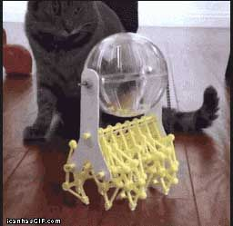 The Evolution Of The Hamster Ball Funny Animals Funny Gif Hamster