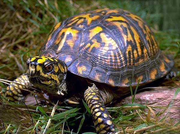 tortues boites - Recherche Google