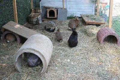 garten kaninchen pinterest. Black Bedroom Furniture Sets. Home Design Ideas