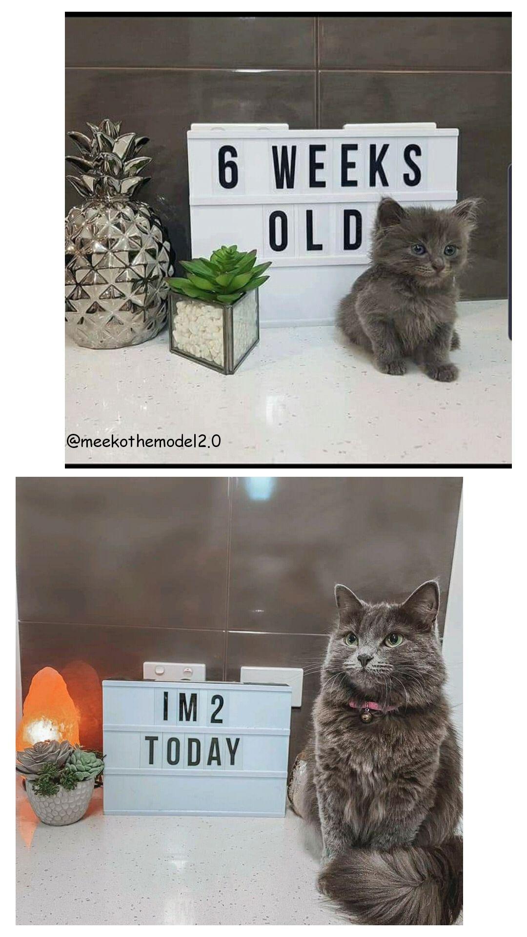 Kitten Does Even Bigger Growhttps I Redd It G7shtwu9d7r41 Jpg In 2020 Kitten Cat Pics Old Images