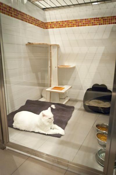 Luxury Cat Runs Trend Alert Direct Animal Cat Enclosure Cat Hotel Luxury Cat