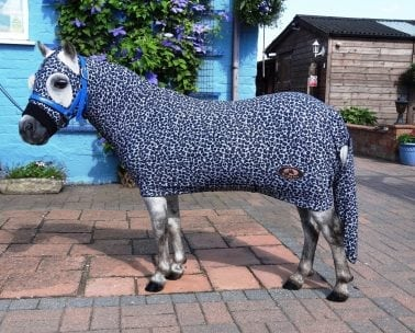 Shetland Pony Miniature Ruggles