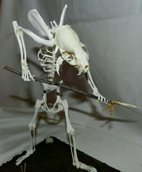 """Hunter"" Skunk #skeleton 127 #bones to build this piece. # ..."