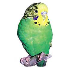 Parakeet Care Sheet Supplies Petsmart In 2020 Parakeet Pet Birds Parakeet Care