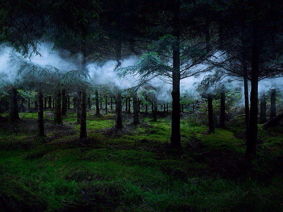 Призрачный лес картинка