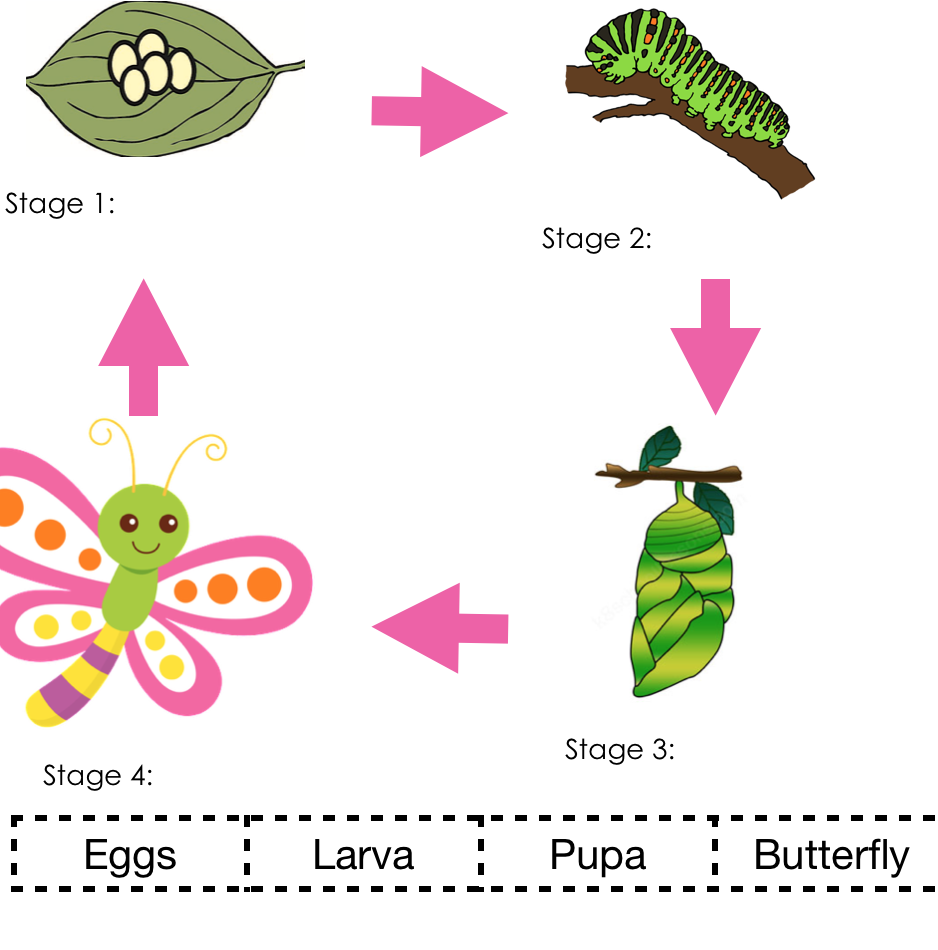 Life Cycle Of A Butterfly Worksheet Preschool Worksheets Social Emotional Learning Free Downloadable Worksheets [ 950 x 938 Pixel ]