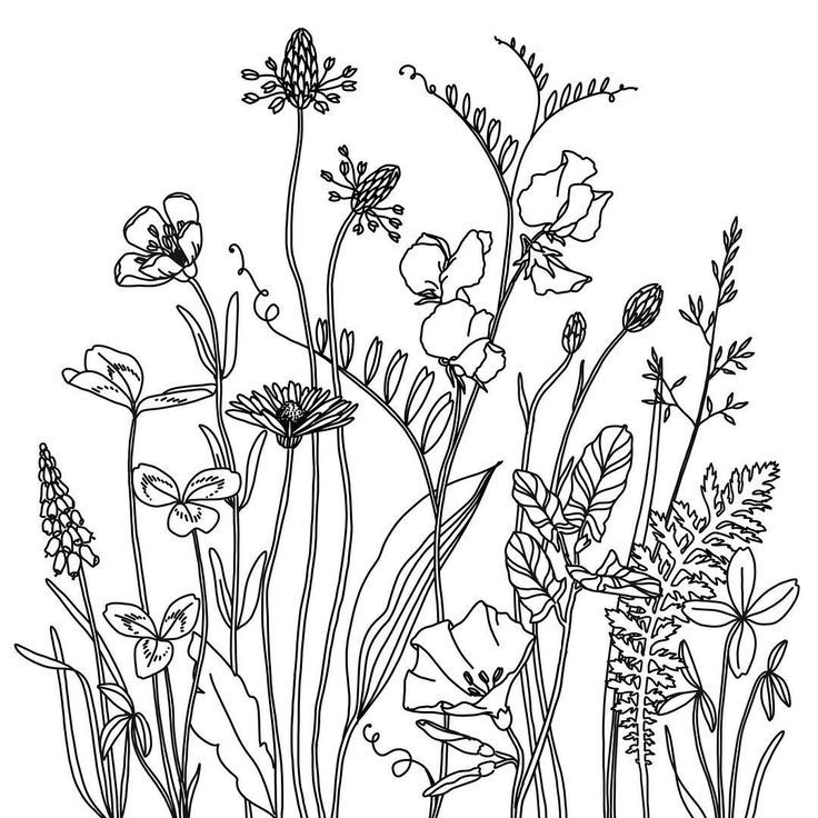 "A n n a    O s z v a l d on Instagram: ""Coseup of the wildflower medow I posted a few weeks ago.. #wildflowers #daisy #buttercup #sweetpea #illustration #floralillustration…"""
