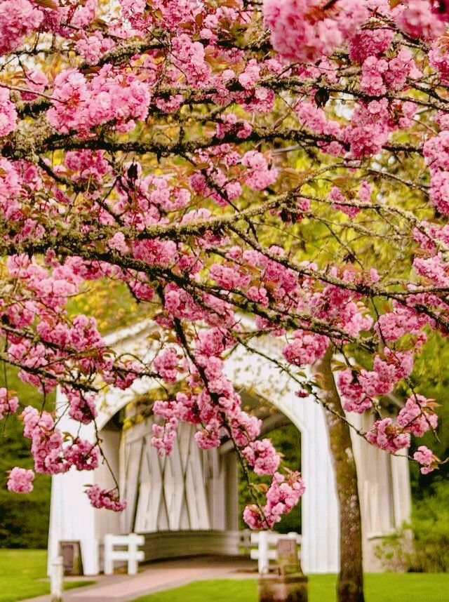 jardines flores de cerezo gardens