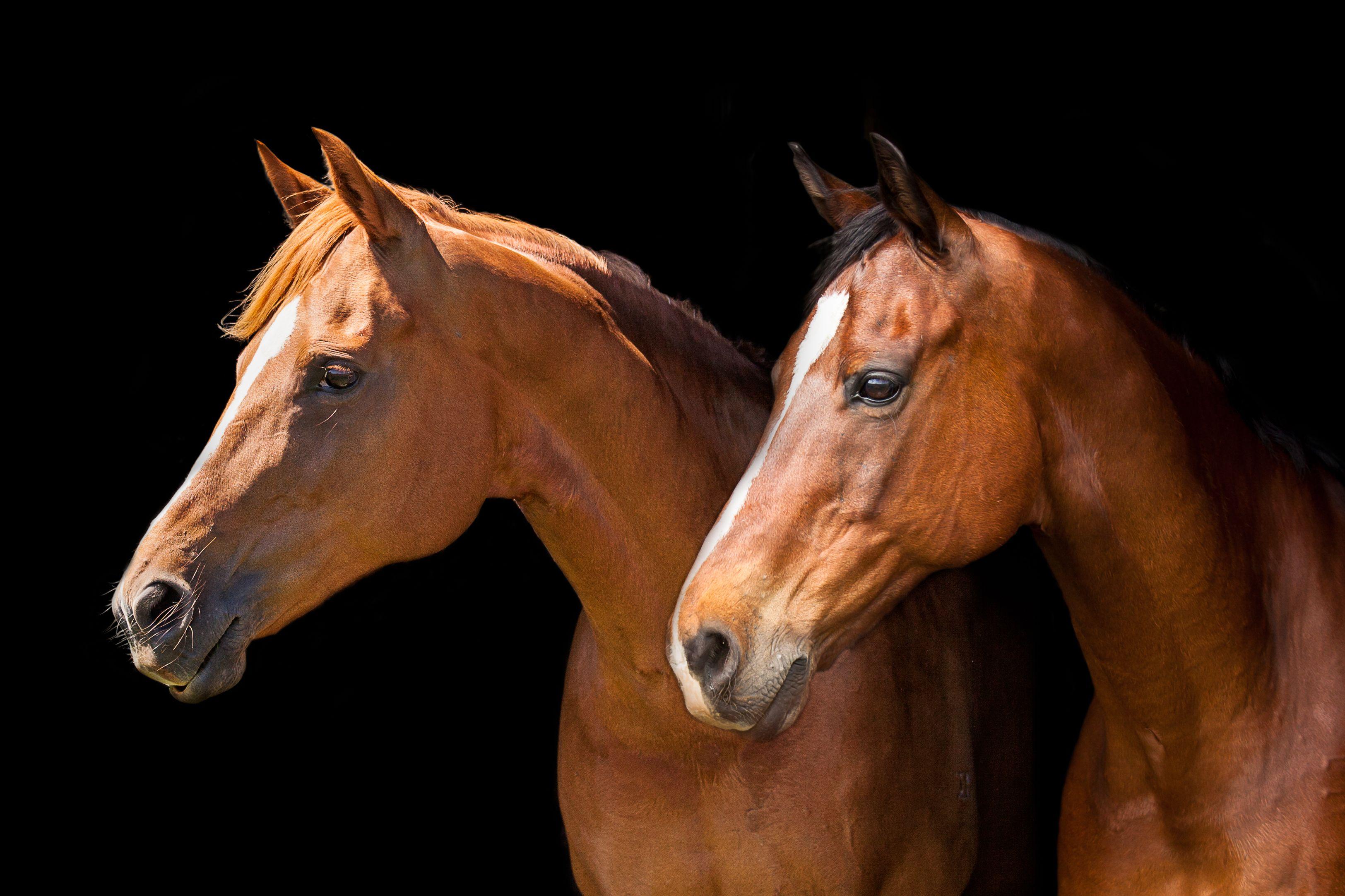 Glass Animals Horses