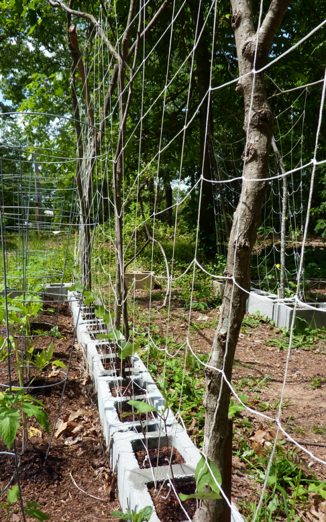 Use salvaged materials to build garden trellises on a budget.
