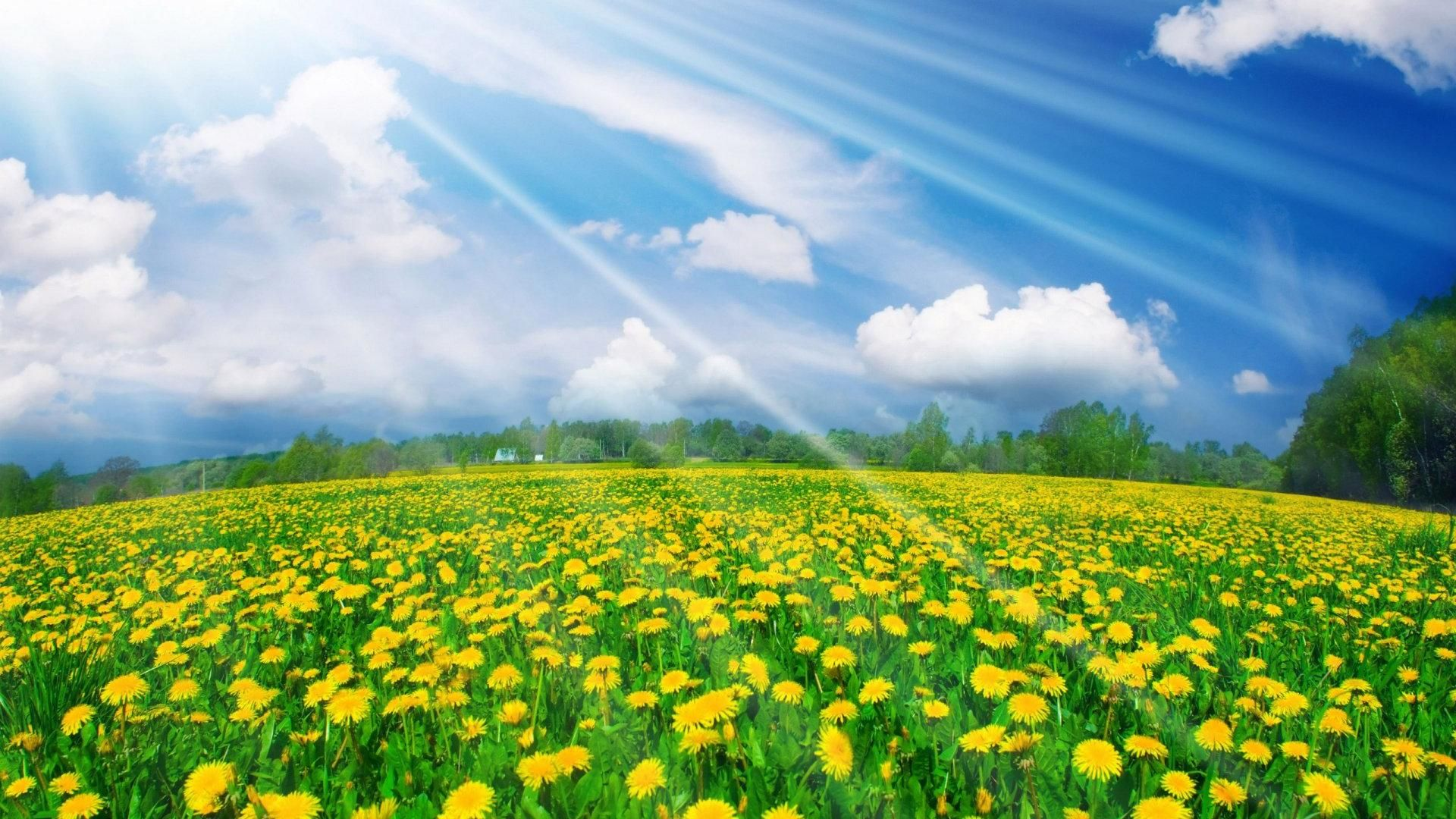 Spring Wallpapers Hd Download Free Pictures Of Spring Flowers