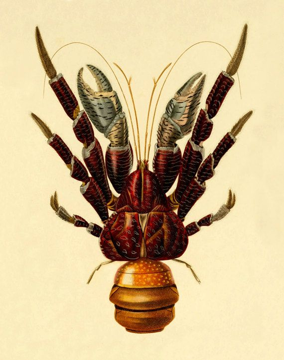 Vintage lobster art print Antique prints Wall art Ocean life Vintage ...