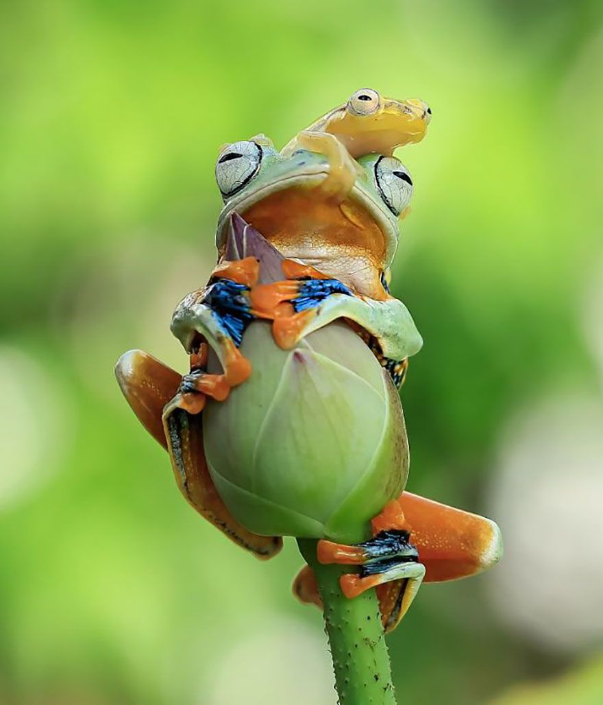 This Photographer Photographs Frogs Like Youve Never Seen Before (37 Pics)