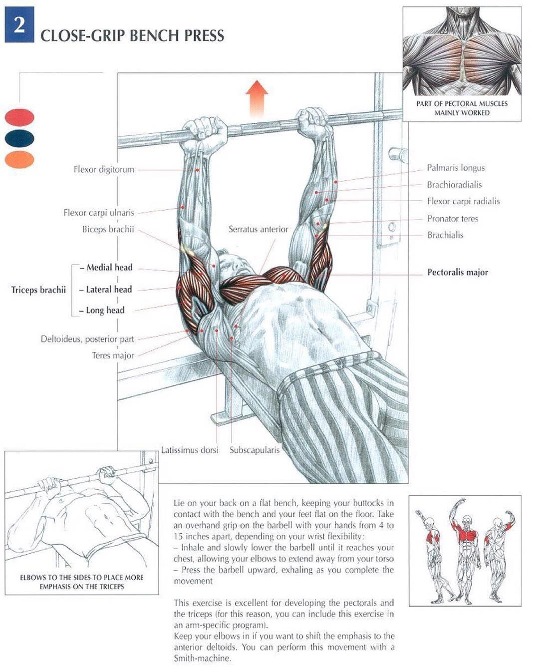 How To Gain Strength In Bench Press Part - 32: Workout · The Close Grip Bench Press Significantly Increases Triceps  Strength.