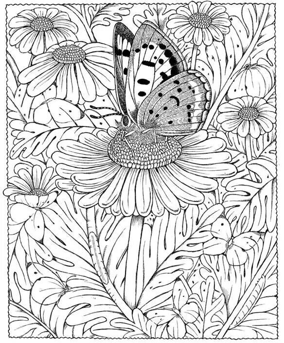 Butterfly Daisy Abstract Doodle Zentangle Coloring Pages Colouring