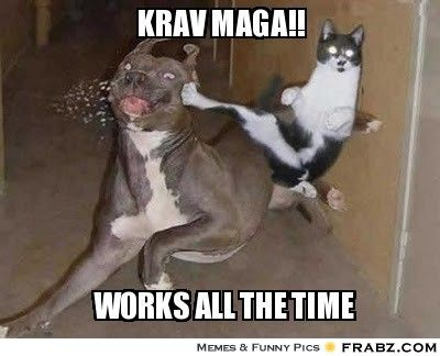 Krav Maga Funny Animal Pictures Funny Cat Pictures Ninja Cats