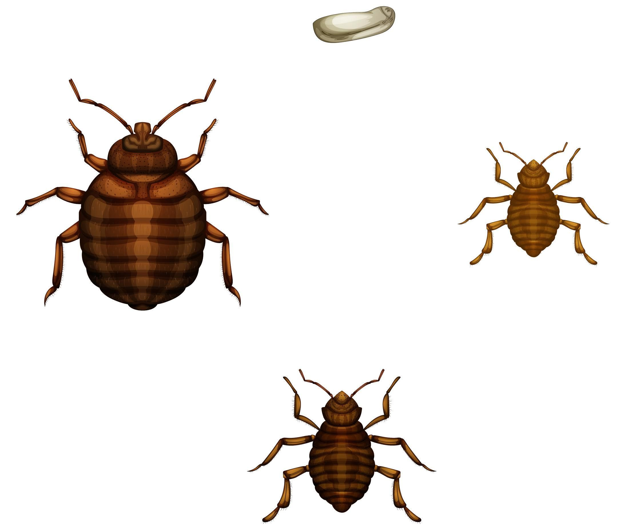 The Bed Bug Co Op Is A Pest Control Company That Offers Affordable