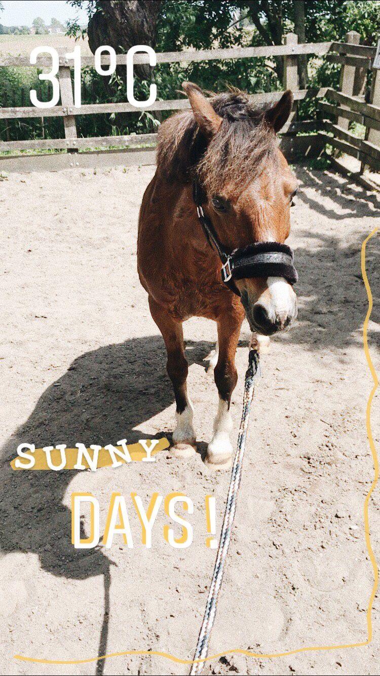 My Little Horsie Funny Instagram Captions Horse Story Instagram Story Ideas