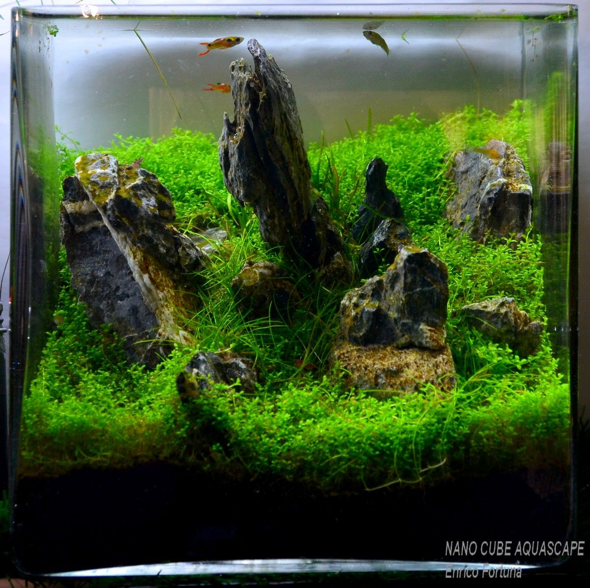 Attractive Nano Cube Aquascaping