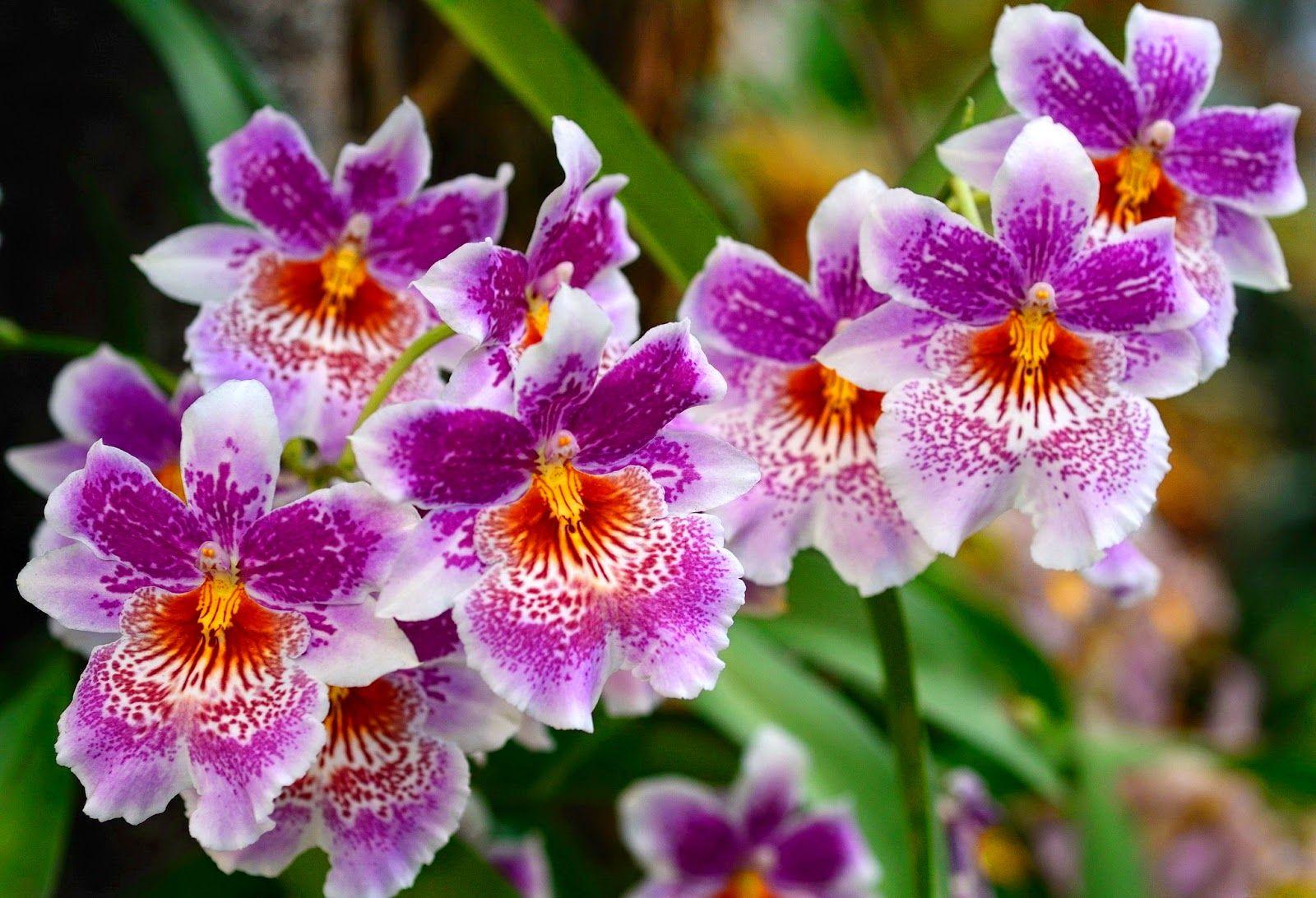 Beautiful flowers desktop background orchids pinterest desktop