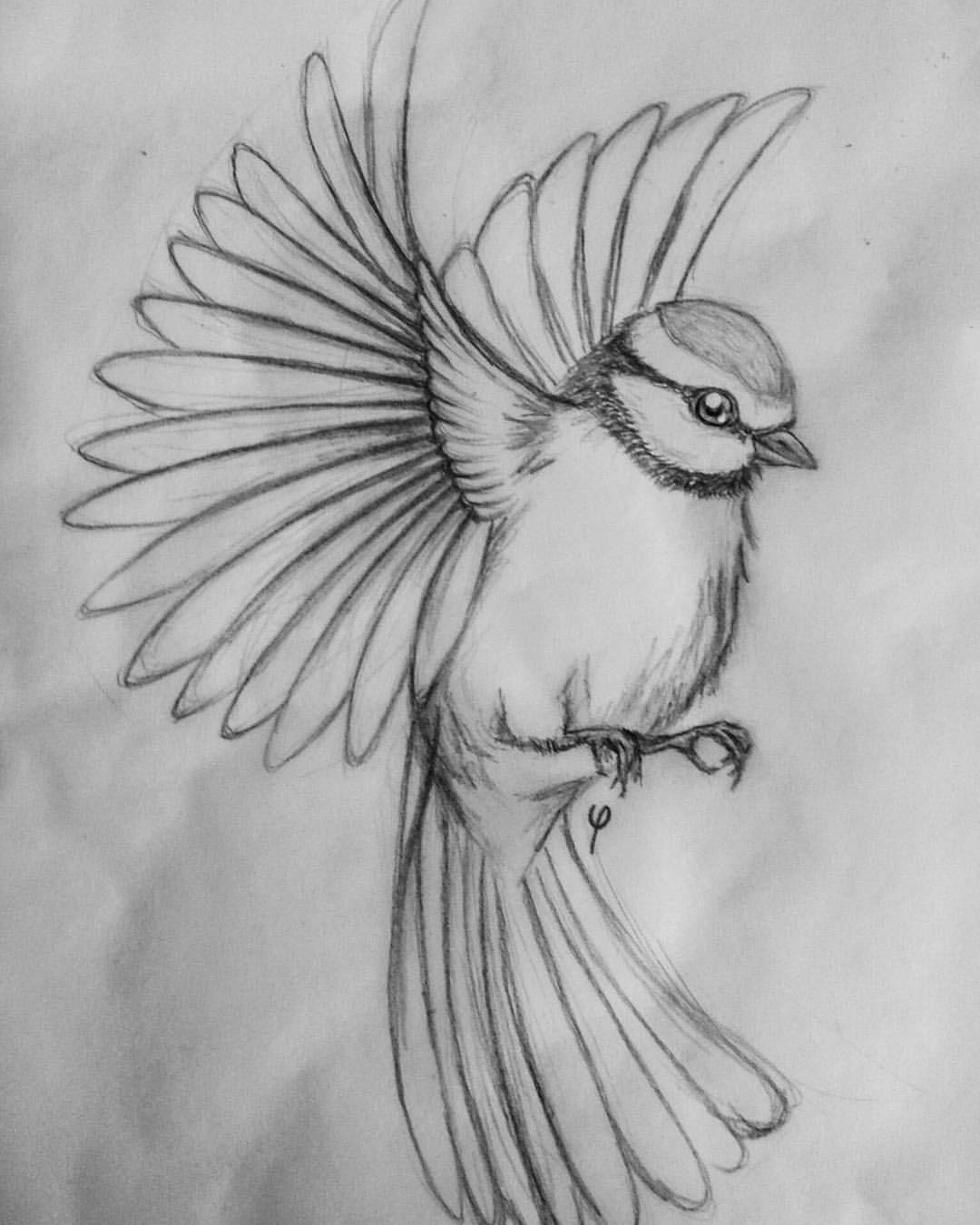 "Camilla on Instagram: ""blue tit sketch #bluetit #tomtit #bird #flying #drawing #sketch #illustration #art #artwork #blackwork #pencil #pencildrawing #blackandwhite"""