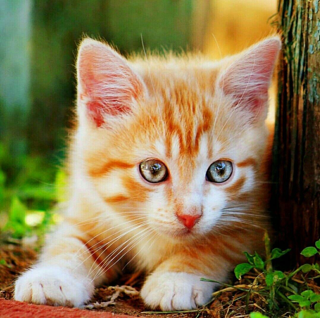 Pin by Deborah Martinez on Cute Animals beautiful