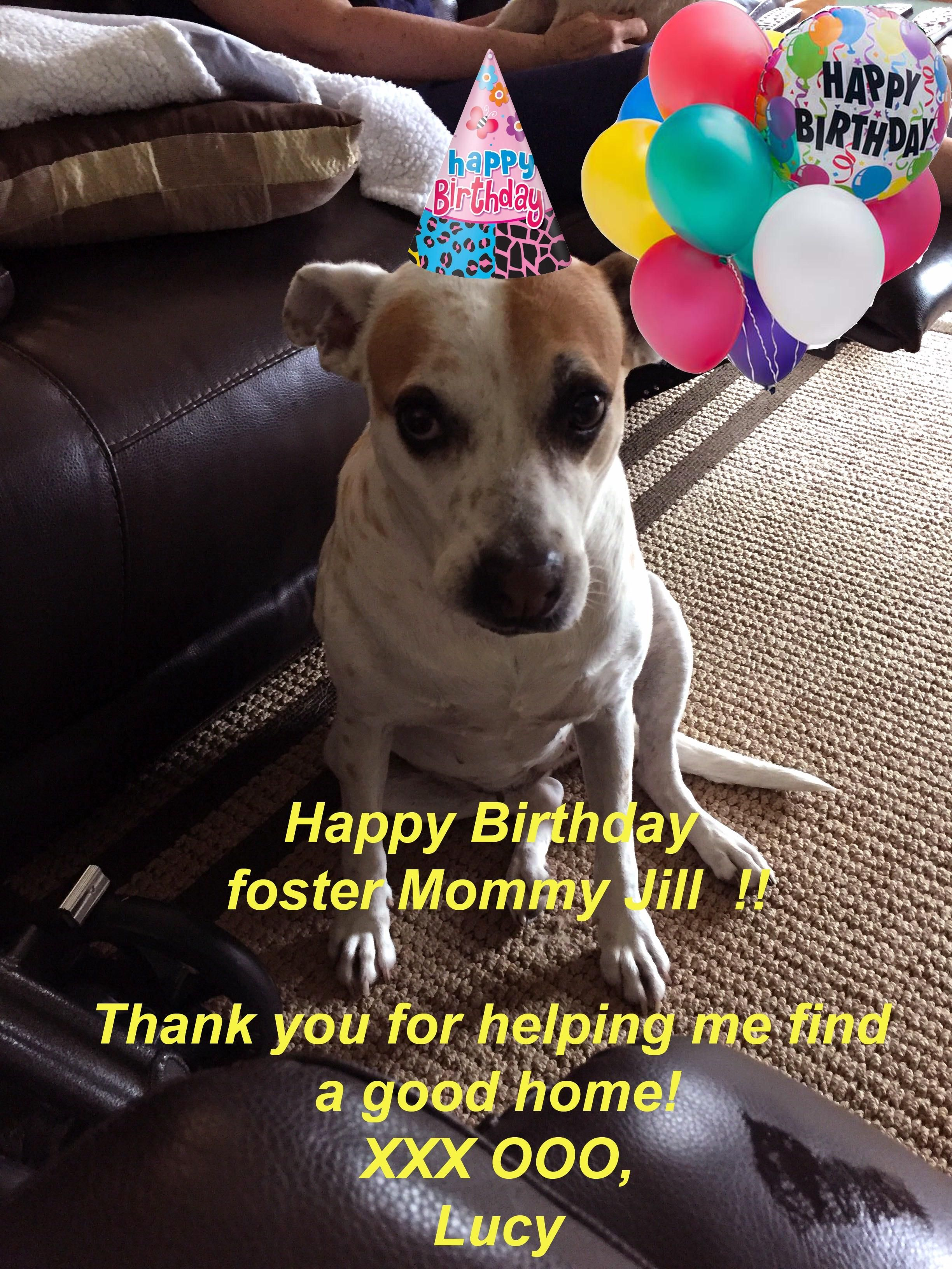 Our new rescue wishing her foster Happy Bday. http://ift.tt/2pvCRY6