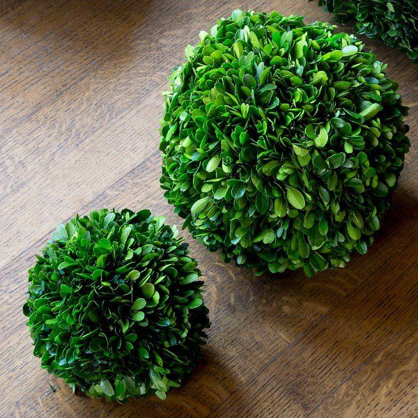 Place Our Preserved Boxwood Ball In A Pot Urn Bowl Or Vignette To Add Fresh Texture To Any Room In Your Home For More Floral Decor Please Visit Boxwood Balls