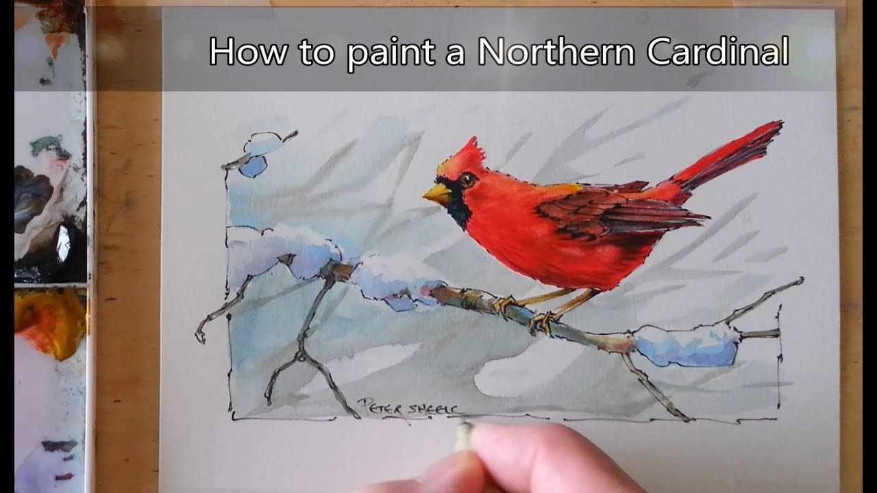 How To Paint A Cardinal Bird In Watercolor Line And Wash In Real