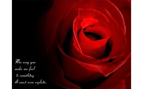 Rose Quotes Love Impressive Loverosewithquotes  For Thee A Red Rose  Pinterest
