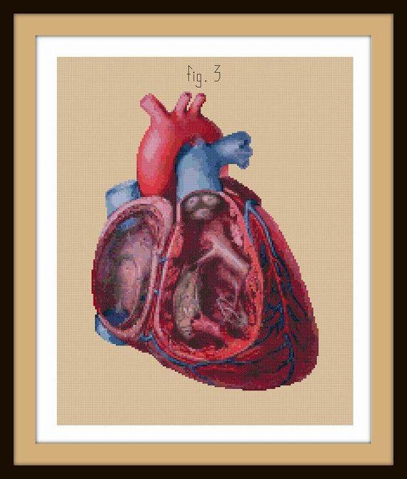 Antique Anatomical Heart Cut-Away cross stitch pattern PDF ...