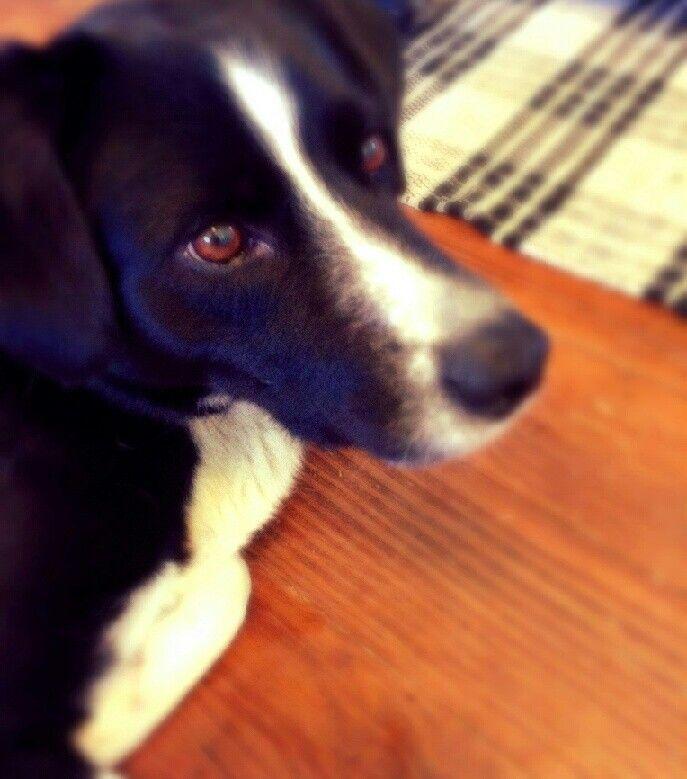 My cousins dog Tucker