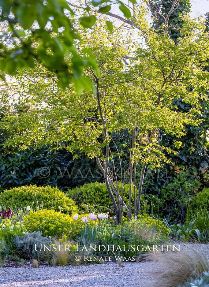 #garten Landhausgarten – Cottage-Garten. Garten planen und anlegen. Gartenplanung Renate… – Garten
