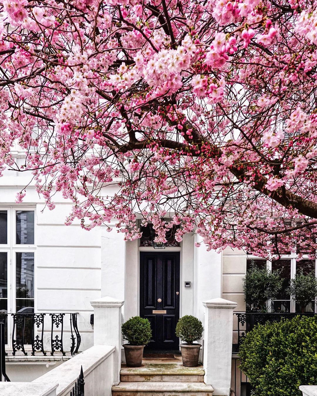 Alex Zouaghi On Instagram London Is Under The Cherry Blossom Tree Just A Little Somethi Blossom Trees Cherry Blossom Tree Backyard Landscaping