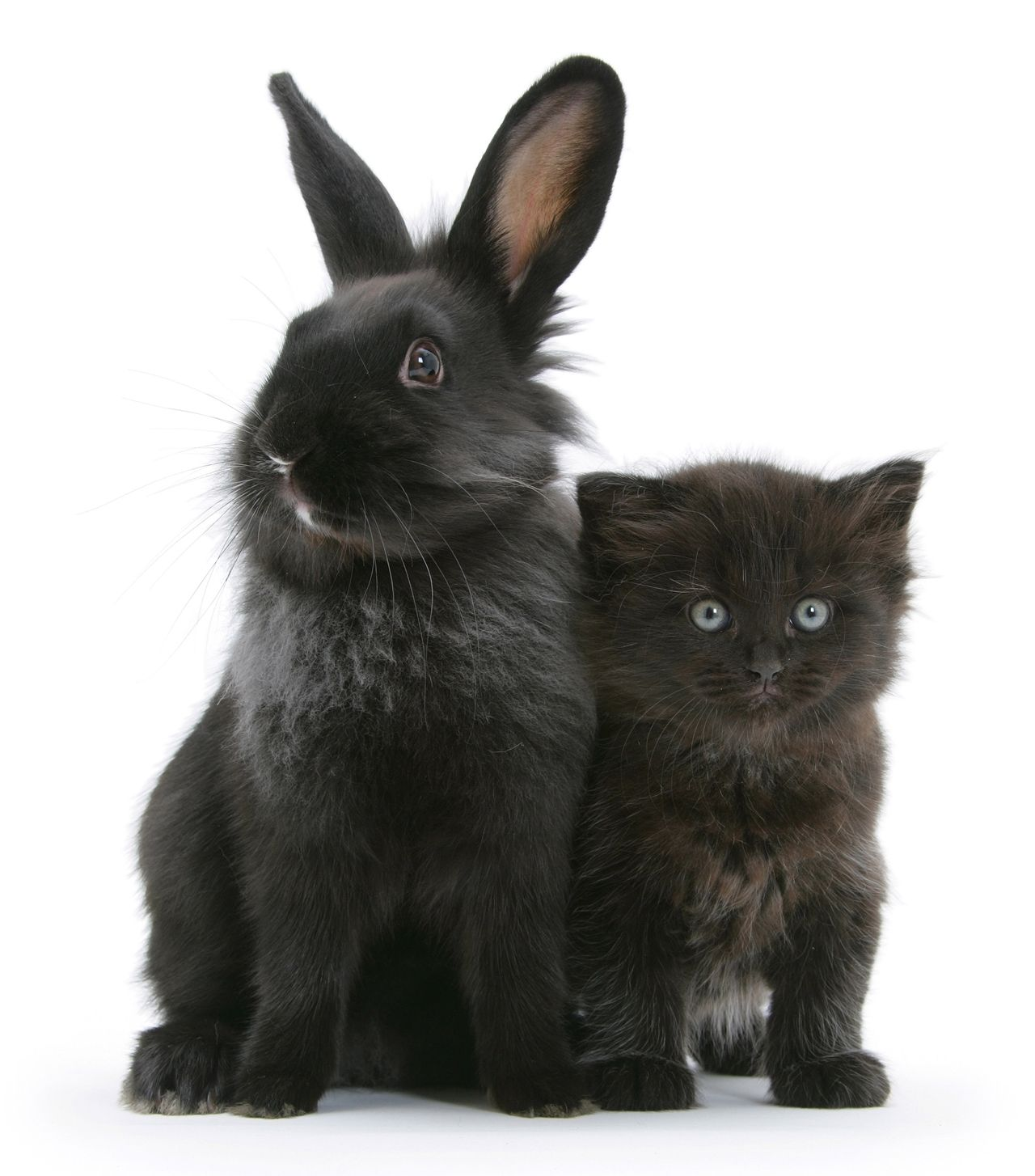 Красивой фотографии кошки кроликов