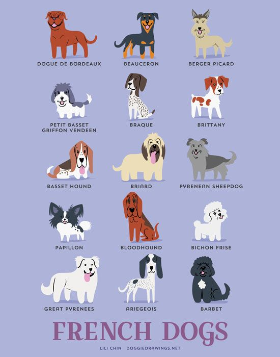 15 Awwdorable Posters Of Dog Breeds From Around The World Dogs Of