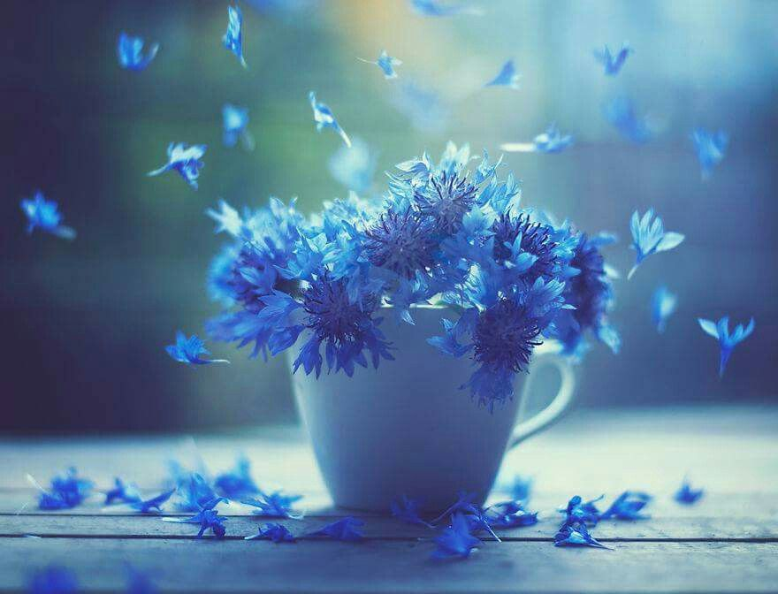 ورد ازرق Flowers Photography Blue Flowers Flowers