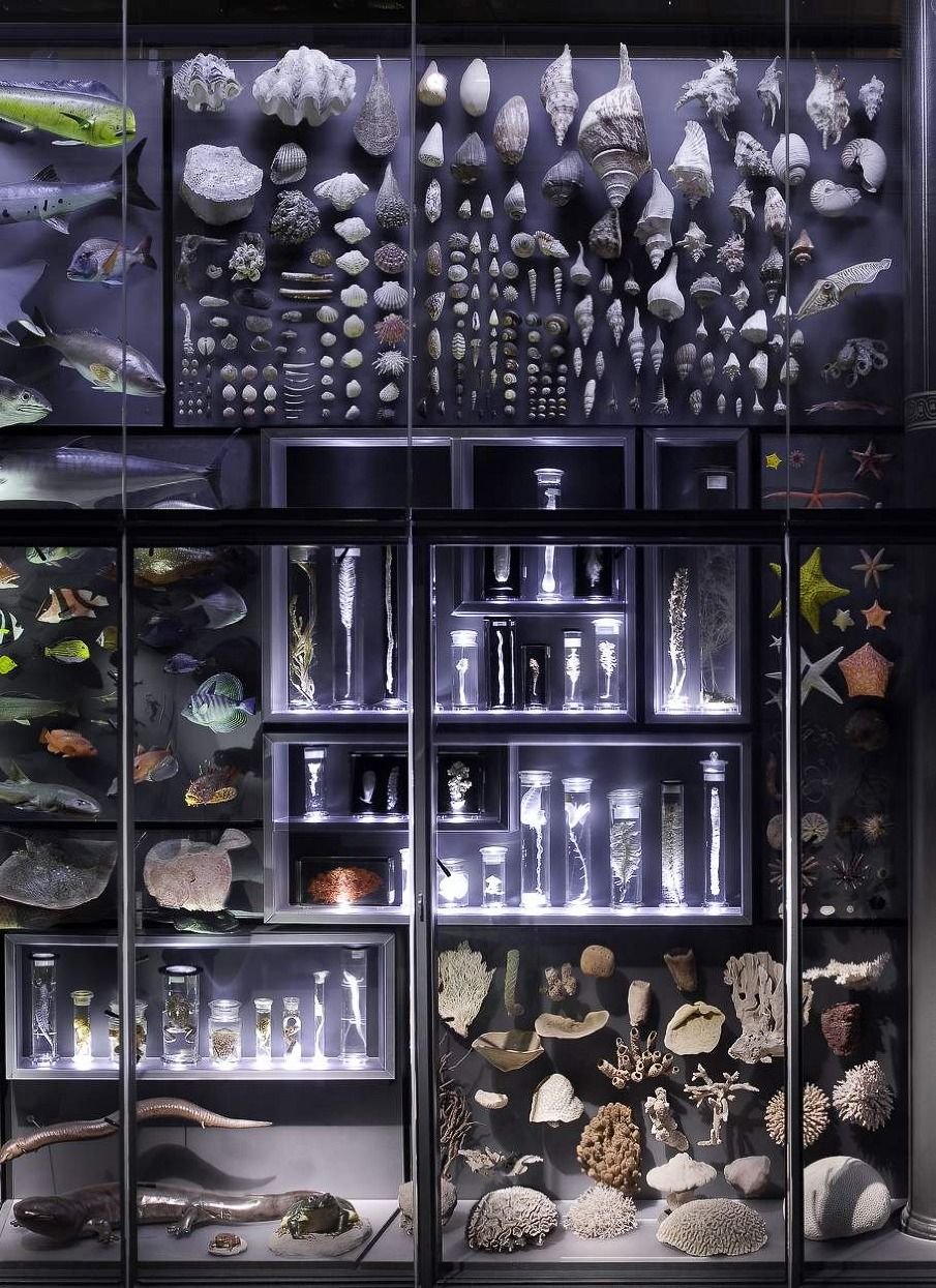 Museum für Naturkunde, Berlin. Love the idea of a wall-mounted science/artifact display case.