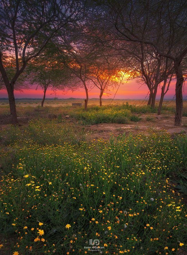 Spring Flowers زهور الربيع by bader nasser